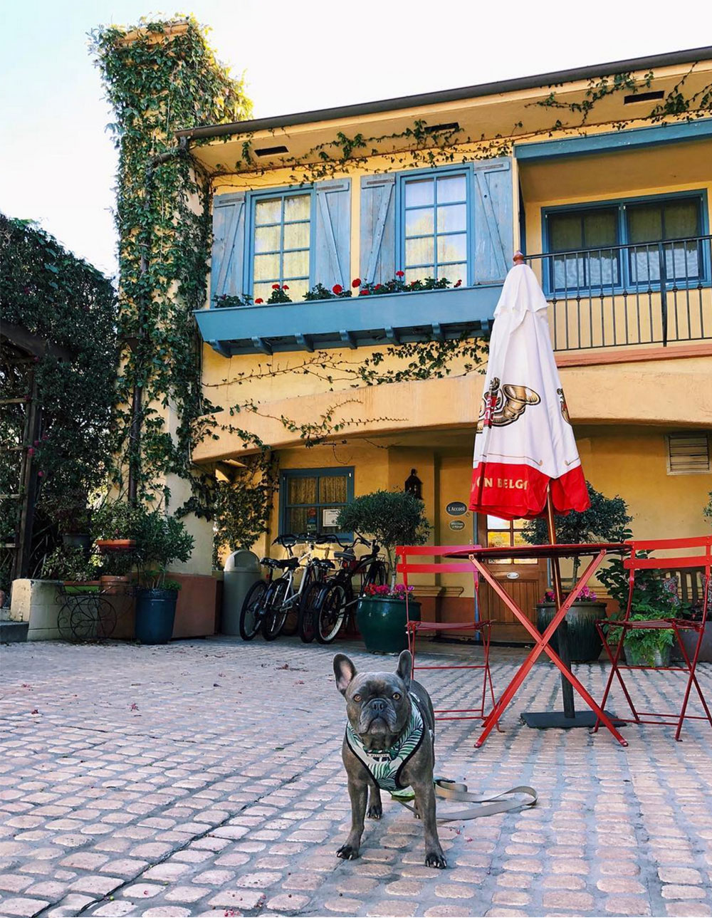 pet friendly hotel slo